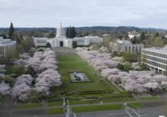 OregonStateCapitolBlossoms_Lightbox